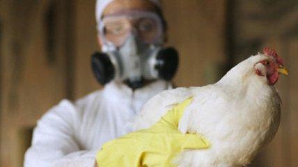 В Китае вспыхнул новый вирус, тяжело переносимый человеком: подробности