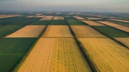 С 1500 до 15 тысяч долларов за гектар: украинский рынок земли может вырасти в 10 раз, но есть условия
