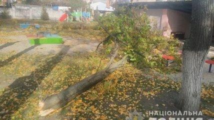 Дерево упало на детскую площадку во время дневной прогулки