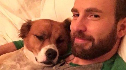 Крис Эванс на карантине оконфузился со своей собакой (Фото, Видео)