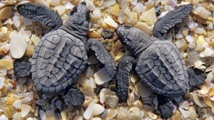 Черепахам закрыли доступ в аэропорт имени Джона Кеннеди