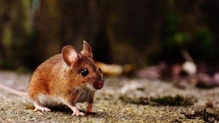 Пересадка костного мозга молодых мышей старым предотвращает старение