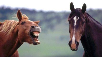 Смешные фото-приколы, которые зарядят вас позитивом!