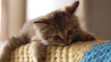 Эти смешные и наглые коты развеселят вас!