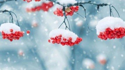 Мокрый снег с дождем: синоптик озвучила прогноз погоды 6 марта в Украине