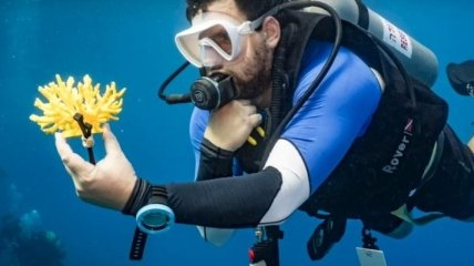 """Напечатанные"" кораллы из биопластика спасут жизнь рыбам и морским организмам"