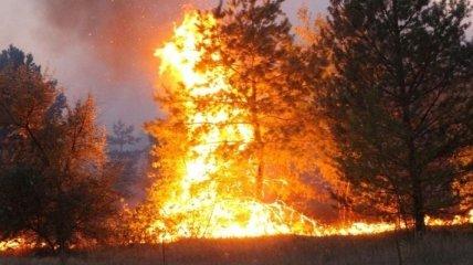 Лісові пожежі дісталися до лісів під Києвом (відео, карта)