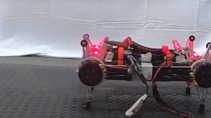 Исследователи: Роботы смогут научиться ходить самостоятельно