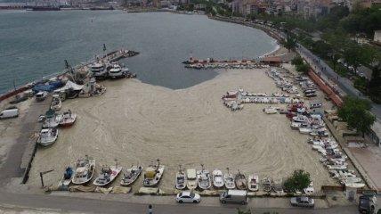 """Морские сопли"" захватили побережье Турции (фото, видео)"