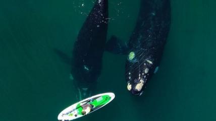 Любопытные киты подплыли к девушке, у которой был день рождения