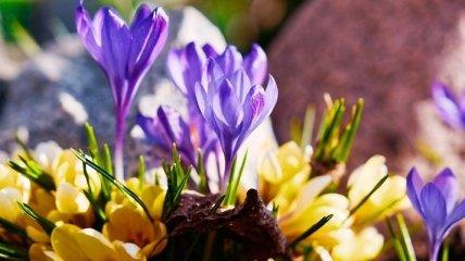 13 марта - приметы и обряды в Васильев день