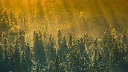 Традиционные методы уже неэффективны: новая лесная противопожарная система будет работать за счет деревьев