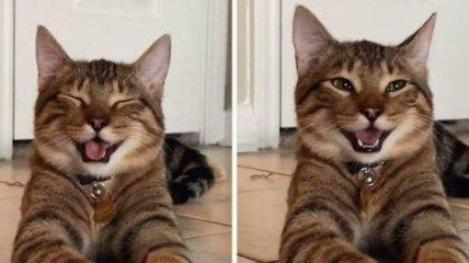 Милых и забавных котиков вам в ленту: прикольные фото