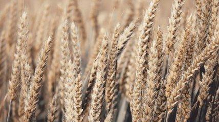 Минэкономики сообщило, сколько зерна экспортировали в этом году