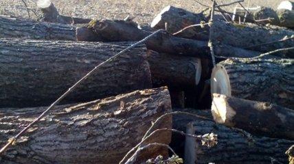 Крымчан призвали запасаться дровами