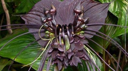 Самые странные растения, которые способны вас удивить (Фото)