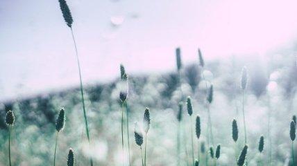В Украине ухудшается аллергенная обстановка