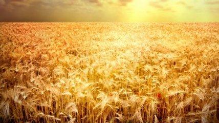 Египет закупил очередную партию украинского зерна