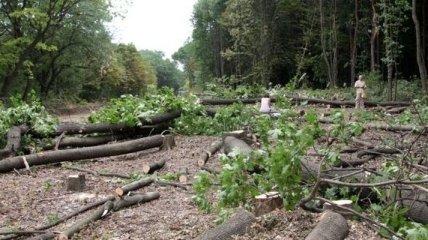 Экологи рассказали о незаконной вырубке леса в украинских заповедниках