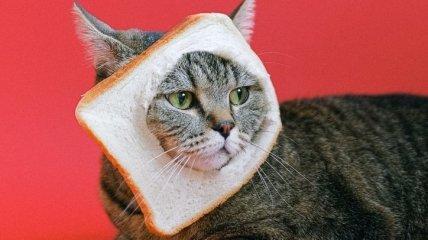 Тормознутые, эволюционирующие и явно под валерьянкой: самые юморные картинки и мемы с котами для поднятия настроения за неделю (фото, видео)
