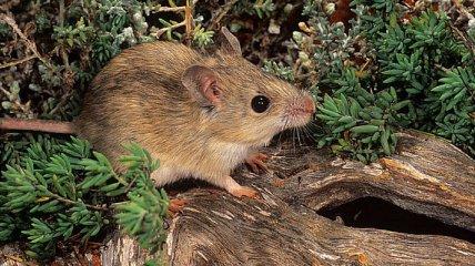"""В Австралии нашли сто лет как """"вымершее"""" животное"""