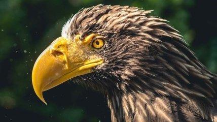 Прояснило некоторые процессы эволюции и адаптации: слезы птиц и людей похожи