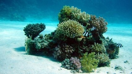 Серьезная проблема: среда обитания кораллов может быть уничтожена