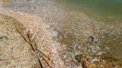 Берег Черного моря засыпало дохлой рыбой и креветками: люди жалуются на адский запах (видео)