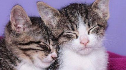 Коты уменьшают шансы получить сердечный приступ