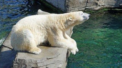 В Венском зоопарке родился белый медвежонок