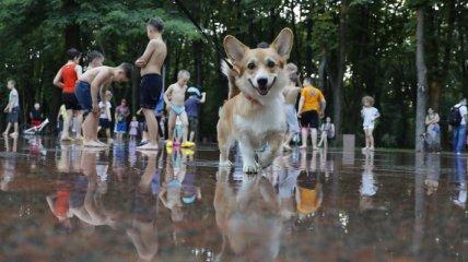 Жара и кратковременные дожди: синоптик рассказала о погоде в Украине в выходные
