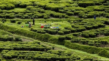 Бразилия в этом году ждет рекордного урожая кофе