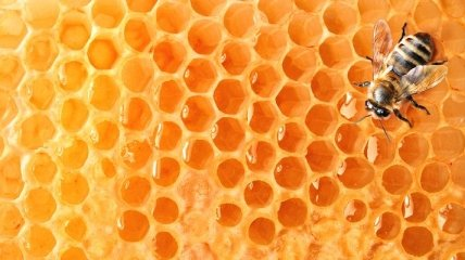 Мед помогает бороться с лишними килограммами