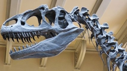 Как птицы: найдены останки пернатых полярных динозавров