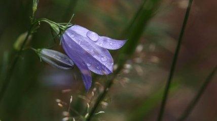 Готовьте зонтики: синоптики рассказали, где на выходных пройдут дожди