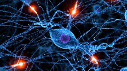 Ученые изобрели искусственный нерв от хронических болей