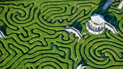 Longleat Hedge Maze: самий довгий лабіринт у світі (Фото)