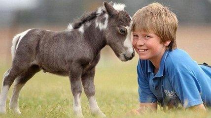 Забавные лошадки, которые радуют окружающих
