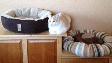 Забавные кошки, у которых своя логика и они делают, что хотят