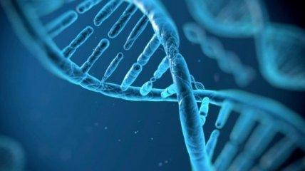 3-D компьютерную модель генома человека разработали ученые SISSA