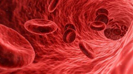 Больше не значит лучше: длительность жизни связали с уровнем железа в крови