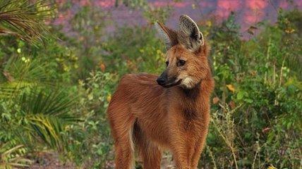 Этот удивительный мир: малоизвестные экзотические животные