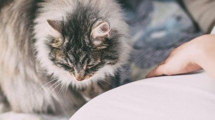 Защитный механизм: ученые объяснили, почему кошки у многих людей вызывают аллергию