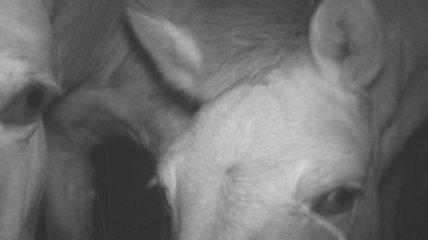 Ученые показали фото очень любопытных животных в Чернобыле