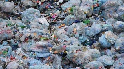 "Закарпатью грозит ""мусорная катастрофа"""