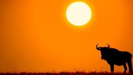 Саванна: животные и природа африканского мира (Фото)