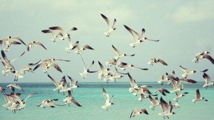 Люди следующие: ученые выяснили, что птицы ежедневно питаются пластиком