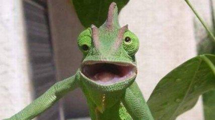 Смешные снимки кривляющихся животных
