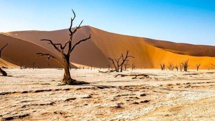 На планете зафиксировали участки убийственной жары с высокой влажностью