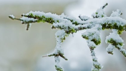 Снег уже пересек границу: синоптик дала прогноз на праздник 8 Марта